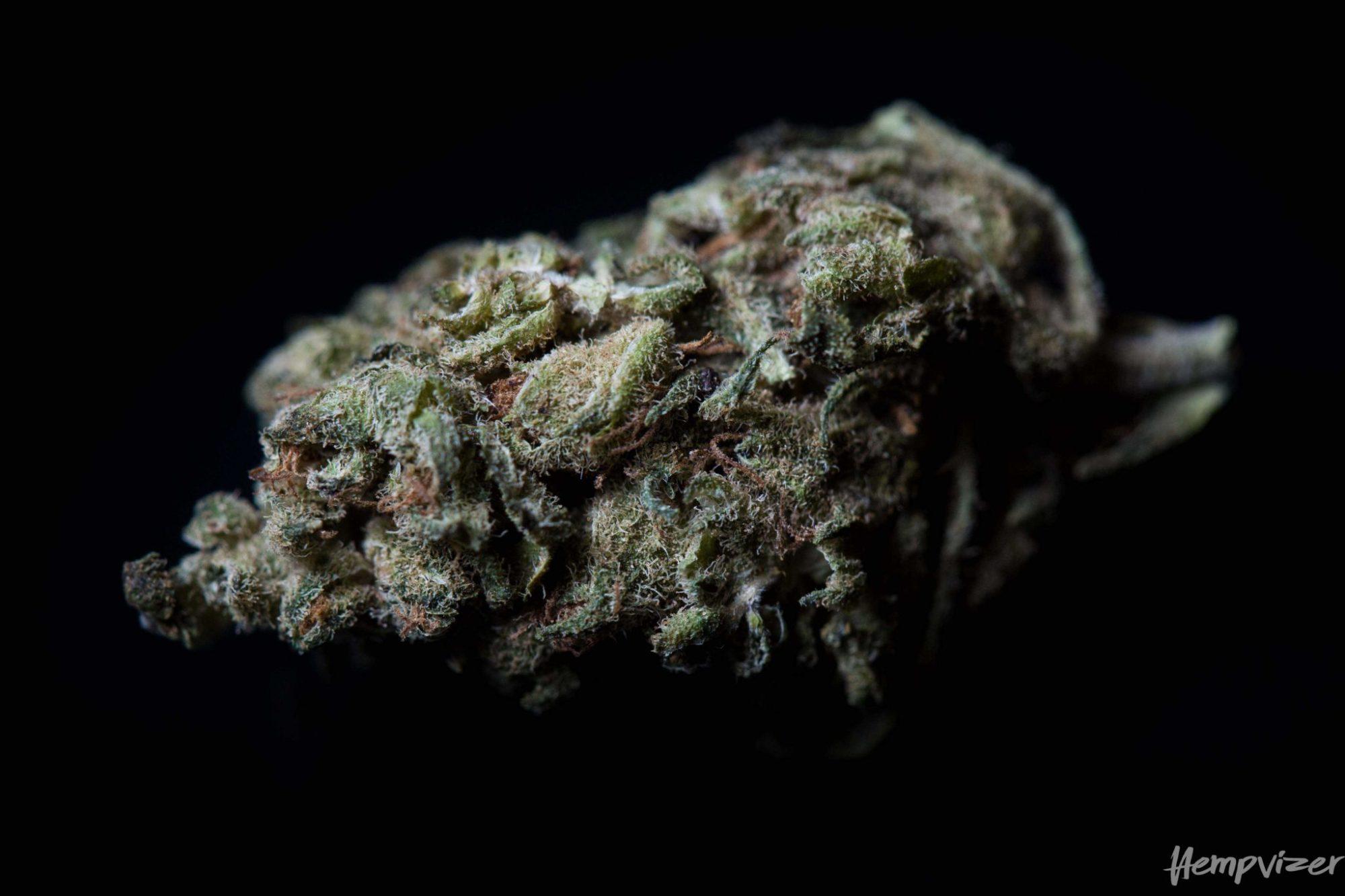 CBD Blüten Bubble Gum 7% CBD 1