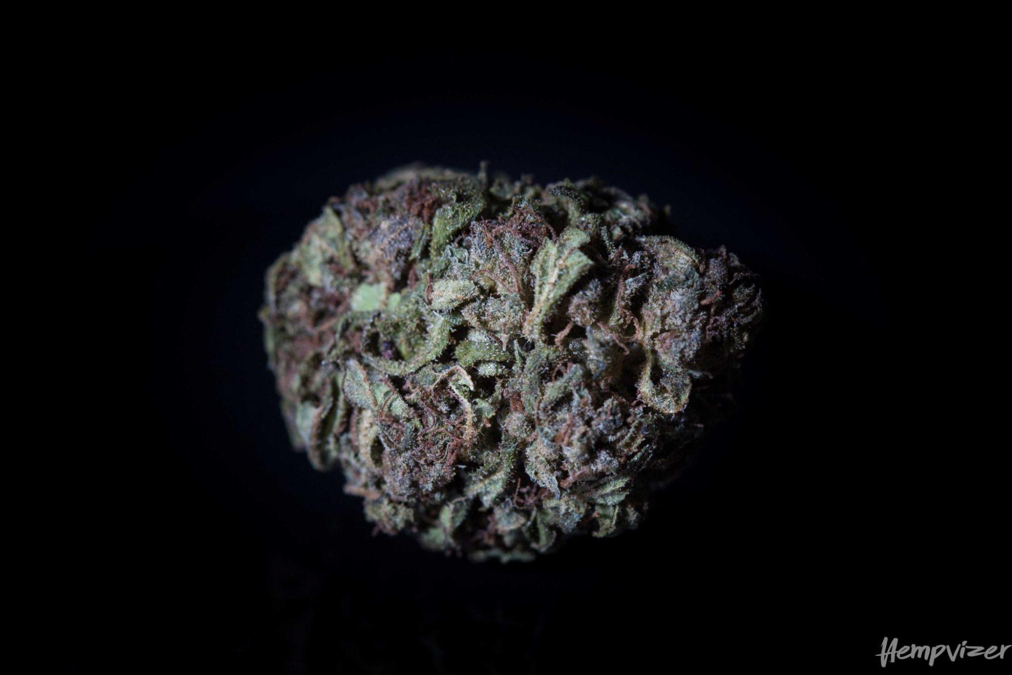 Gorilla Glue #4 8% CBD