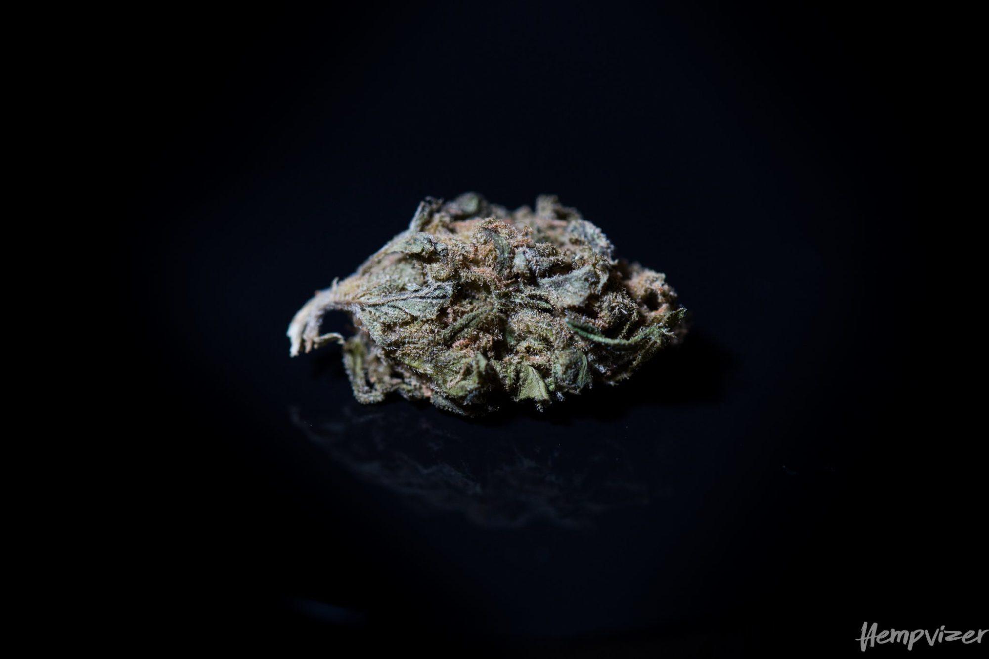 CBD Blüten CBD 9% Hempvizer 1