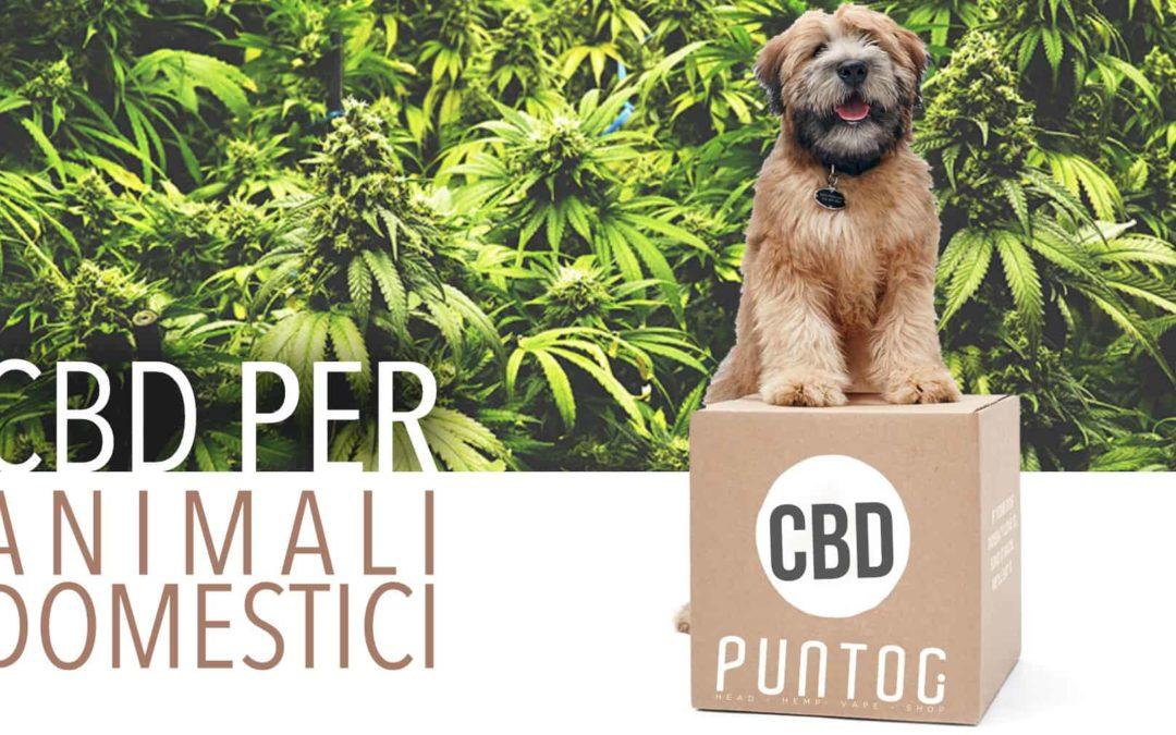 Il CBD per cani è realmente sicuro o può portare problemi?
